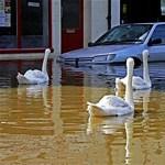 Megdöbbentő videó: Felsőzsolca, áradás után