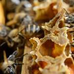 Méhek vetettek véget a focimeccsnek – videó