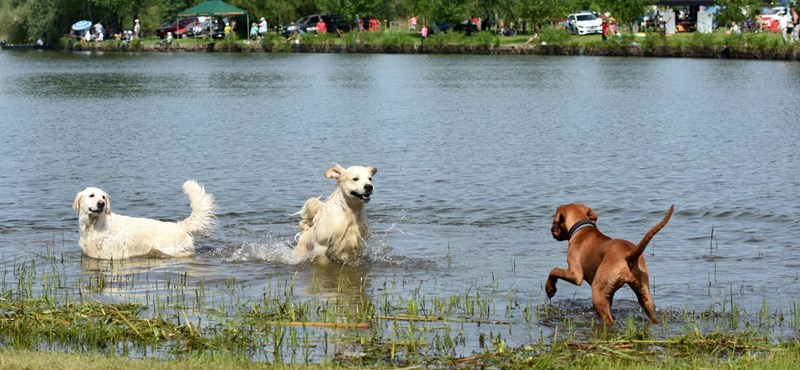 Kutyával a Balatonon