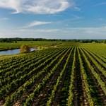 Duna Borrégió: a kövidinkától a kékfrankosig