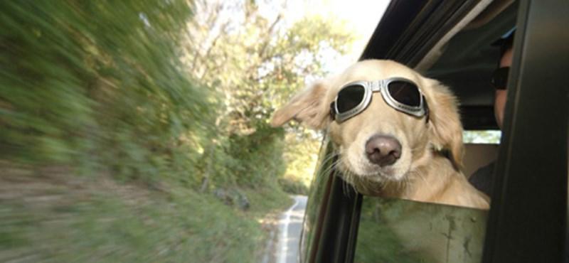Kutya okozott repülőbalesetet (videó)