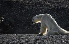 Annyira drámai a sarkvidéki felmelegedés, hogy már Putyin sem viccelődik rajta