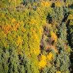 Lázár János úgy elvesztett egy erdőpert az EU Bíróságán, mint a huzat