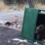 Ha bármikor medvebocsokat találna a kukában, így szabadítsa ki őket - videó