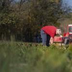 52 településen valósult meg Orbán nagy álma, a teljes foglalkoztatottság