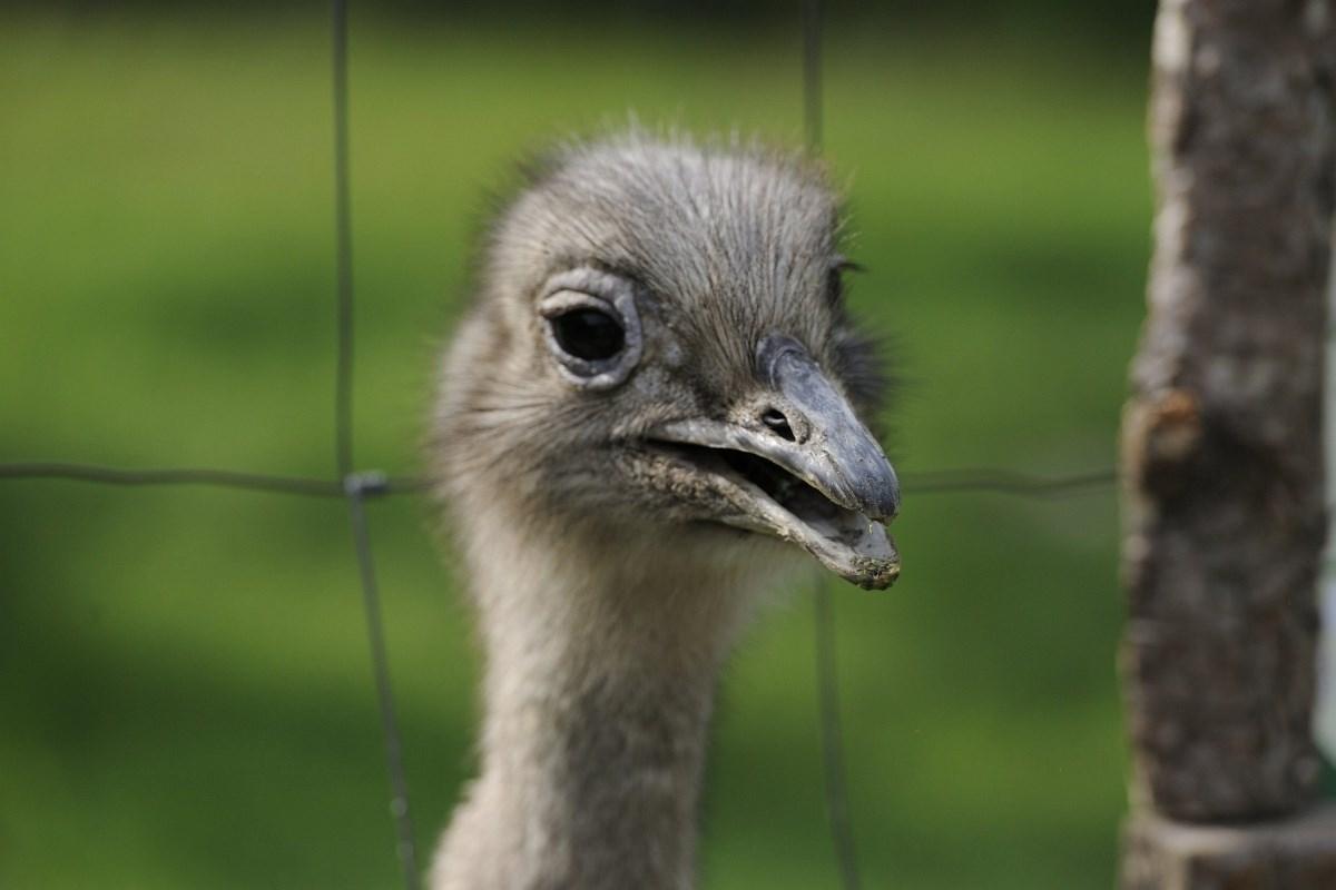Fotók: Új állat érkezett a Szegedi Vadasparkba