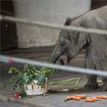 Fotók: így ünnepelte féléves szülinapját Asha