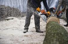 Elvehetik a lopott fát, hogy odaadják a rászorulóknak