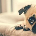 Bármilyen állatot is tart otthon, ezt mindenképp töltse le, nagy segítség lesz