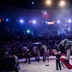 A MÁV oldhatja meg a gyerekek jutalomjegye körüli cirkuszt