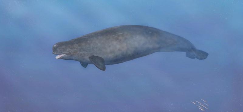 Különös tengeri teremtményre bukkantak Dániában