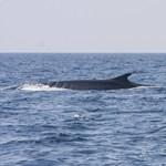 Igazi bálnacsodát fotóztak le a horvát tengerpartnál