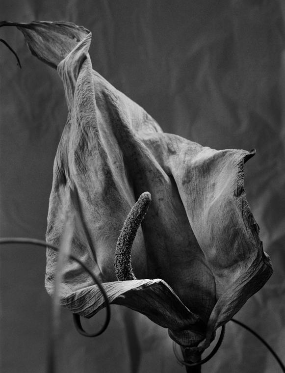 Születés (2002) Nagyítás fotógaléria